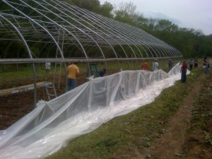 Covering the greenhouse at Starbrite Farm